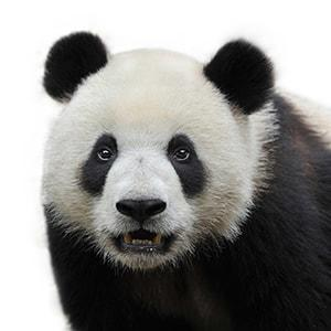 Dressing like a panda bear sold a house for one agent.